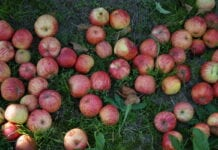 jablka przemysłowe 2020