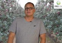 Komunikat sadowniczy PROCAM 20 z 07.09.2020