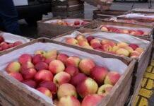 bronisze ceny jabłek październik 2020