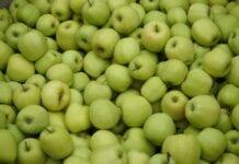 Ceny jabłek deserowych u pośredników – 13 października 2020