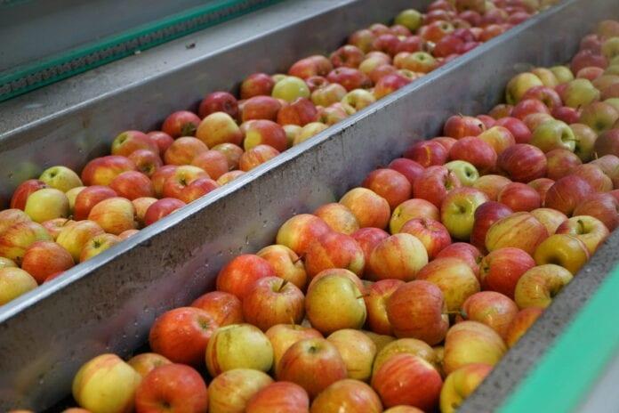 cen jabłek deserowych