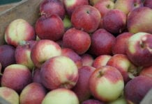 Jakie odmiany jabłek cieszą się najlepszym popytem?