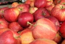 Serbowie rozpoczynają eksport jabłek do Indii – wyższe ceny i dobre nastroje