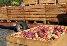 zmowa na rynku jabłek