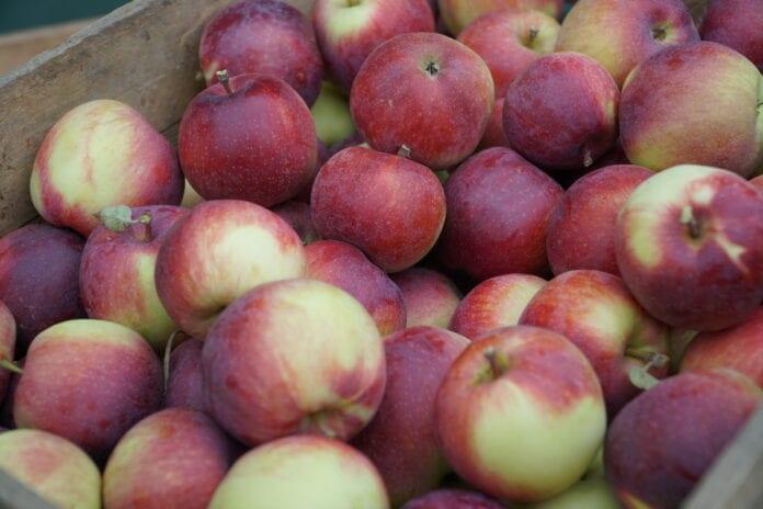 jabłka Empire