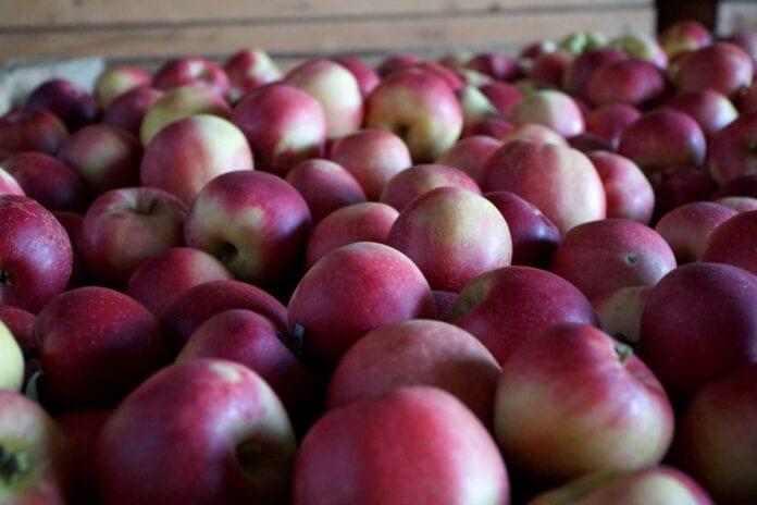jabłka ceny