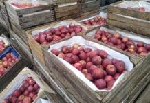 Ceny jabłek na Broniszach – relacja z rynku hurtowego, 2.11.2020 [VIDEO]