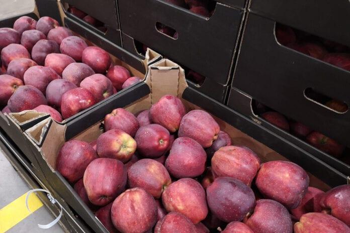 ceny jabłek w grupach producenckich
