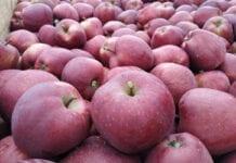 Ceny jabłek deserowych w grupach producenckich – 9 listopada 2020