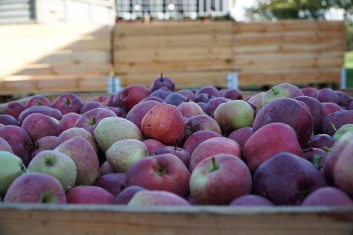 jabłka przemysłowe ceny
