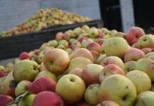 Zamieszanie ze skupem jabłek. Jak rozwinie się sytuacja po 1 listopada?