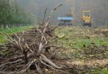 karczowanie w zamian za drewno