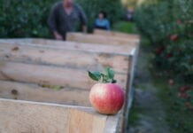 Węgry: połowa plonów i wyzwania dla branży sadowniczej