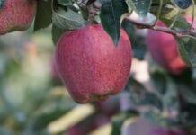 ARiMR ostrzega rolników przed oszustami wyłudzającymi pieniądze