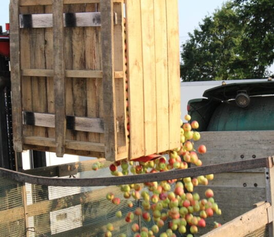 Ukraiński koncentrat jabłkowy wchodzi na amerykański ryneku