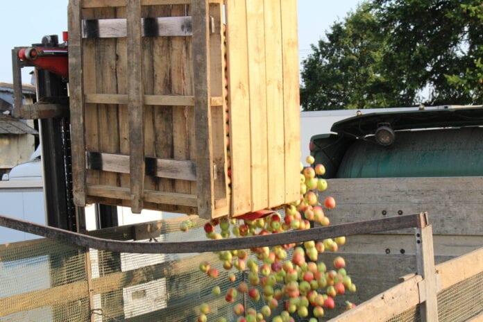 koncentrat jabłkowy