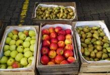 jabłka na rynkach hurtowych