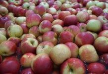 Cennik jabłek na sortowanie – 21 grudnia 2020