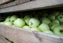 Jakość jabłek w obiektach przechowalniczych – spotkanie on-line z ekspertami!