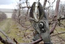 Stawki za cięcie zimowe rosną – jest kilka przyczyn