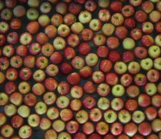 Brexit zaowocuje wzrostem produkcji jabłek na Wyspach?