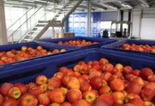 ceny jabłek w Holandii