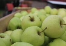 Cennik jabłek na sortowanie – 7 grudnia 2020