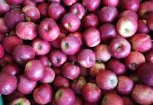 jabłka na obieranie