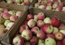 jablka w marketach