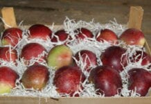 jabłka w paczkomatach