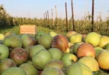 sadownictwo w mołdawii