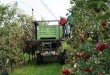 Polska awansuje w rankingu konkurencyjności jabłek