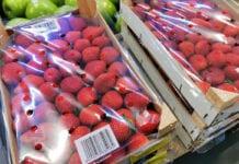 truskawki z Egiptu