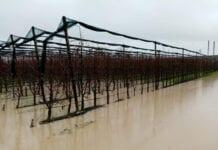 Powodzie i zalane sady we Włoszech