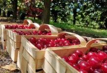 Bezcłowe dostawy owoców i warzyw z Bałkanów bez ograniczeń ilościowych!
