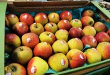 jabłka biedronka