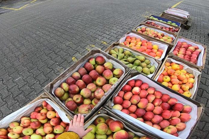 jablka deserowe na broniszach