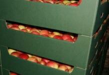Cennik jabłek na sortowanie – 25 stycznia 2021