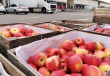 bronisze ceny jabłek