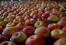 Cennik jabłek na sortowanie – 11 stycznia 2021