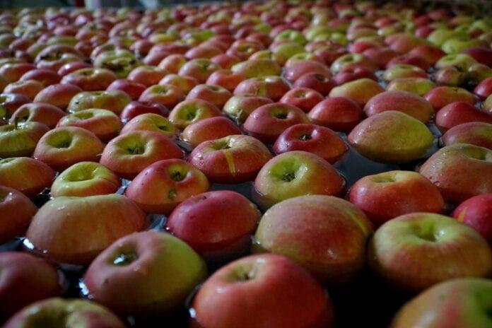 jabłka w grupach producenckich