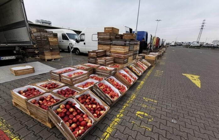 Rynek hurtowy jabłek w Broniszach - aktualne ceny