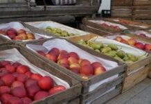 ceny jabłek w hurcie