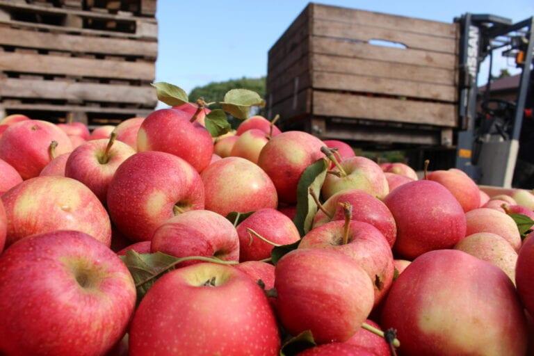 Popyt na koncentraty owocowe teoretycznie powinien wzrosnąć kilkukrotnie