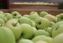 handel jablkami