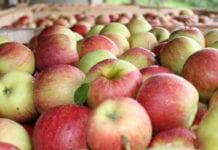 jablka w Austrii