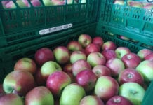 jabłka deserowe w marketach