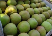 Boskoop – najdroższa odmiana w grupach producenckich
