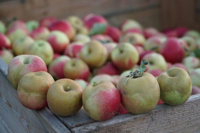 jablka na soki