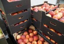 jablka w czechach